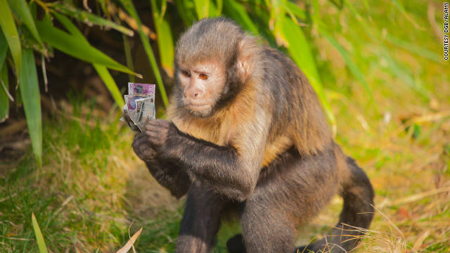Watch out for monkeys with sticky fingers in Bali.