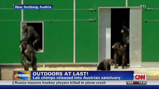 'True Blood' star speaks out for chimps