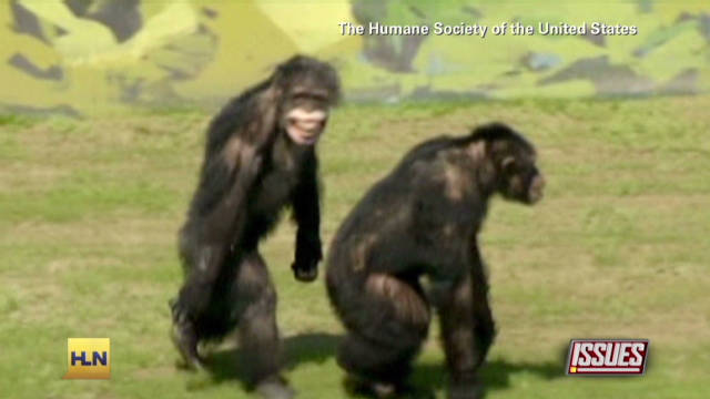 Chimps see sunlight for the first time