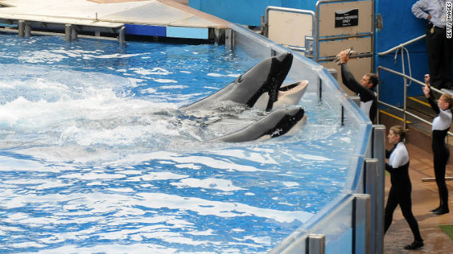 Was killer whale just playing?