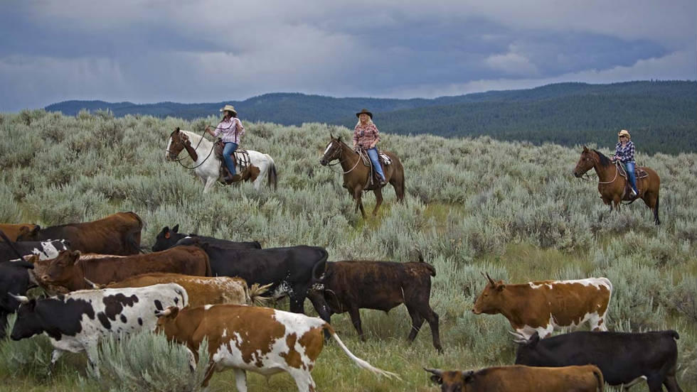 Driving cattle is among the activities offered on the 37,000-acre working ranch.