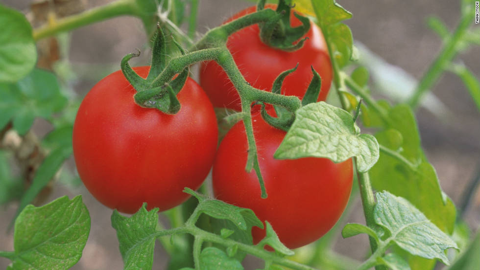 During 2005 and 2006, four large outbreaks of salmonella infections hit 21 states in the U.S. Tainted tomatoes being served in restaurants were found to the be the cause. Investigators from the CDC determined that the produce was grown on two farms in Virginia.