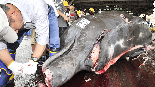 South Korea back on the whaling hunt?