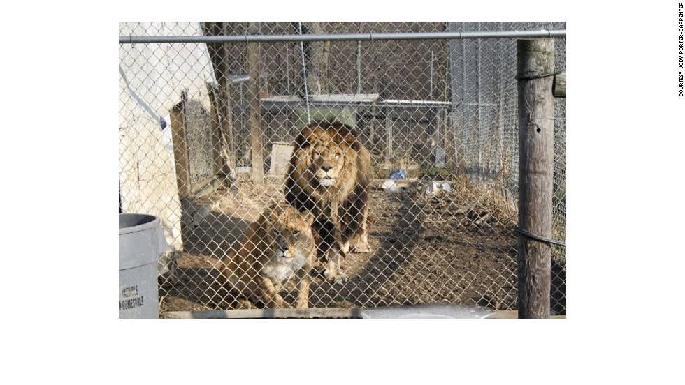 Thompson also kept lions on his property. Seventeen lions were killed after getting free. Thompson's property is about 2 miles outside Zanesville, the city's Mayor Howard Zwelling said.