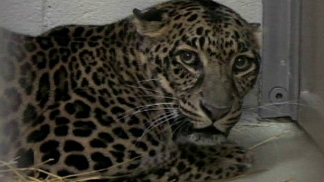 Escaped animals end up in zoo