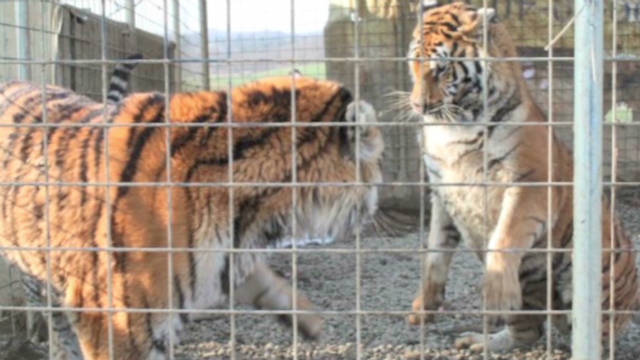am carrol exotic animals_00014027