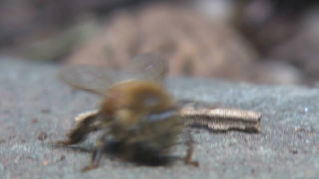 urban.beekeeping.nyc_00012329
