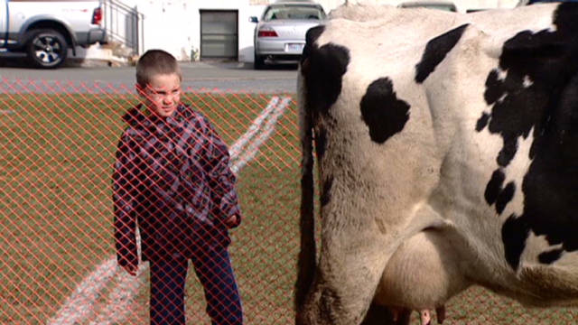 dnt cow patty bingo_00005507