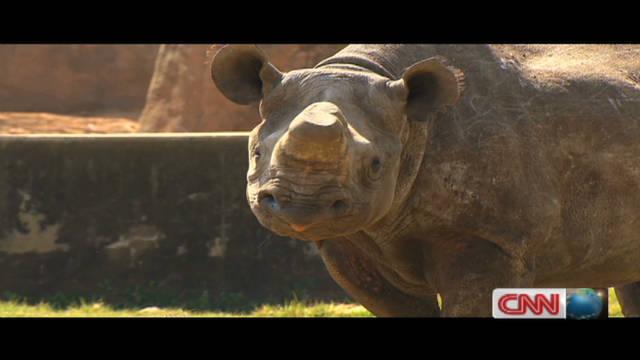 Illegal trade in rhino horns