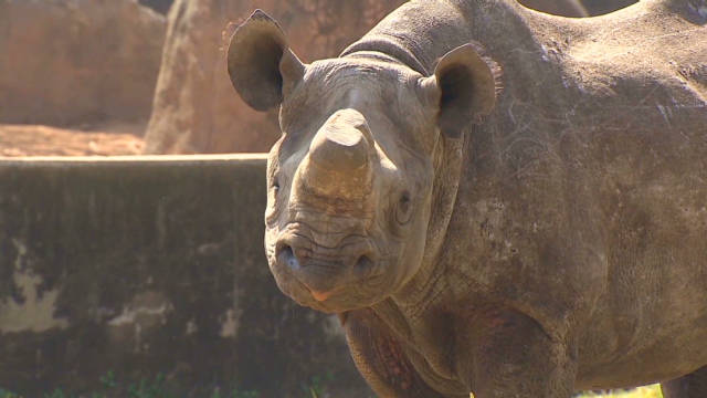 Economics fueling rhino poaching