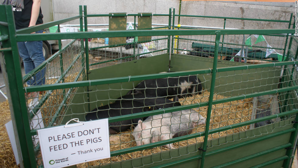 The public are given the chance to feed apple remnants to live pigs at Trafalgar Square as organizers highlight leftover waste could be fed to animals rather than growing food specially for them.