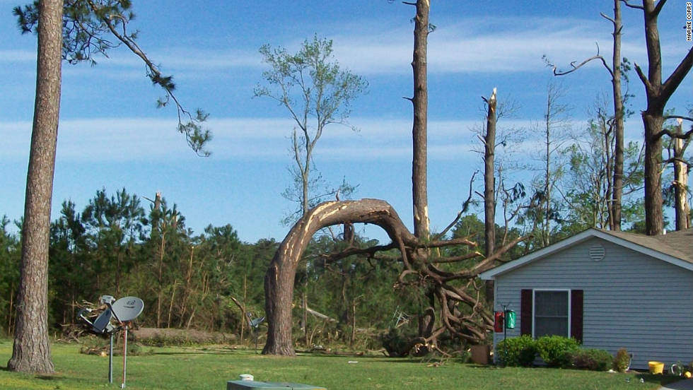 The cycle of deadly tornadoes continued in mid-April when an outbreak of 177 tornadoes struck 10 central and Southern states, killing 38 people.  The power of the twisters bent over this tree in Camp Lejeune, North Carolina.  Total property losses exceeded $2 billion.