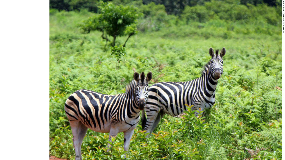 "This snap of the Mlilwane Game Reserve, in Ezulwini, Swaziland, was taken by missionary Michael Todd Goodling. Goodling says: ""The heavy wind patterns that normally come in July never came until October. Now the rainy season is off to a late start. They are saying at least a full month delay. Recently the Swaziland Weather Service reported this is all due to climate change."""
