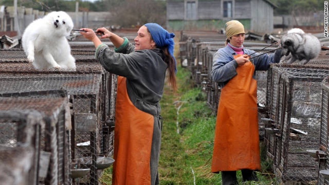Workers handle foxes at a farm outside Minsk, Belarus. Jane Velez-Mitchell says West Hollywood's fur ban will reduce demand.