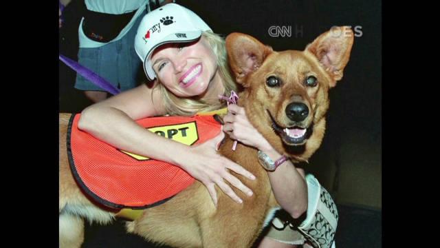 Kristin Chenoweth helping animals in need