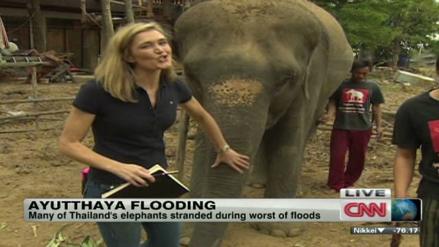 coren thailand flooding elephants _00000000