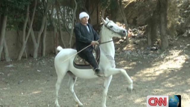 inside africa egypt dancing horses_00020801