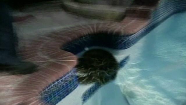dnt florida python pool_00000903
