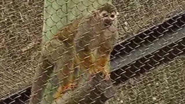 btsvo stolen monkey returned_00002512