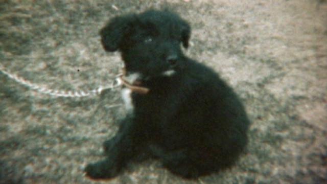 dead dog junk mail_00000415