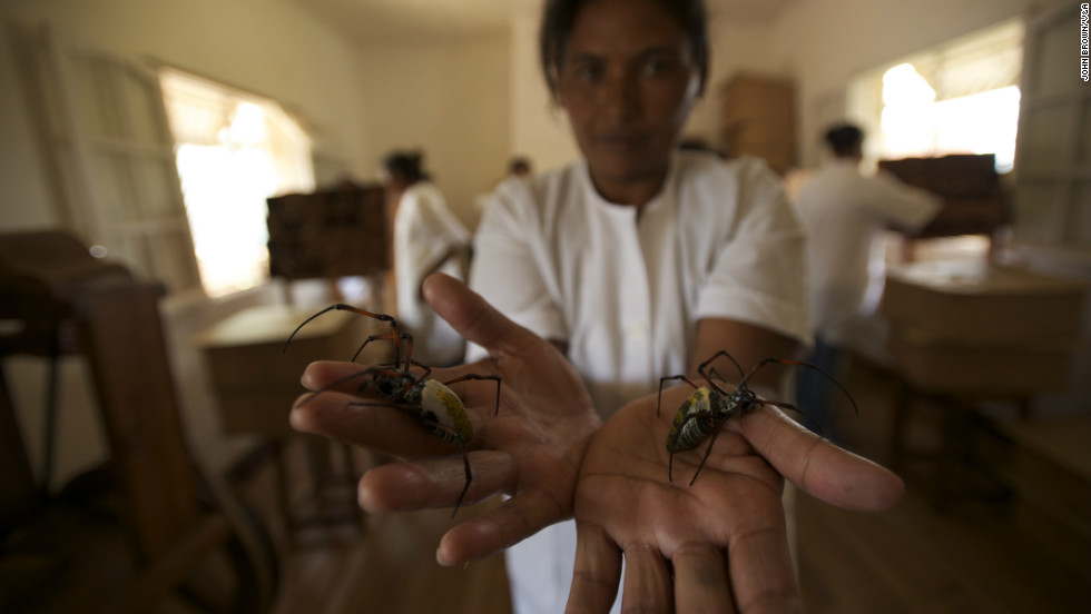 A team of specially-trained handlers spent seven years collecting more than 1.2 million spiders and harvesting their silk, which is naturally bright yellow and incredibly strong.