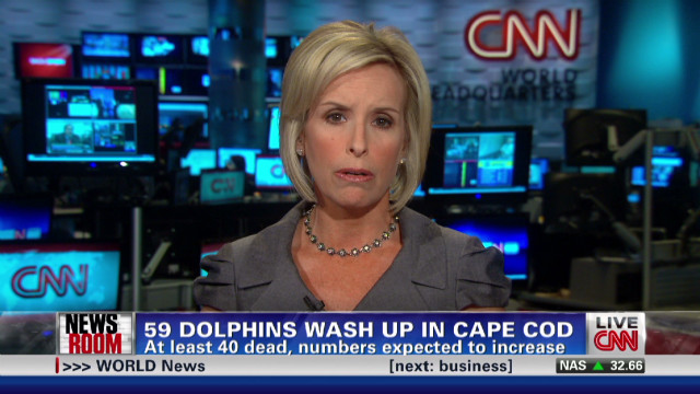 exp 75 Dolphins Wash Up On Cape Cod Beaches_00002001