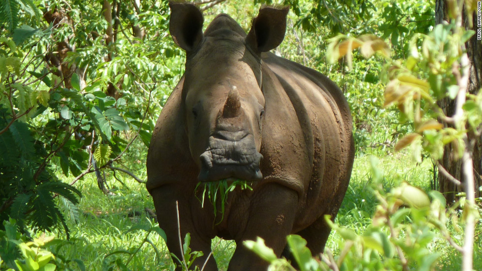 Errol has a close encounter with a rhino Mosi-oa-Tunya National Park, Zambia.