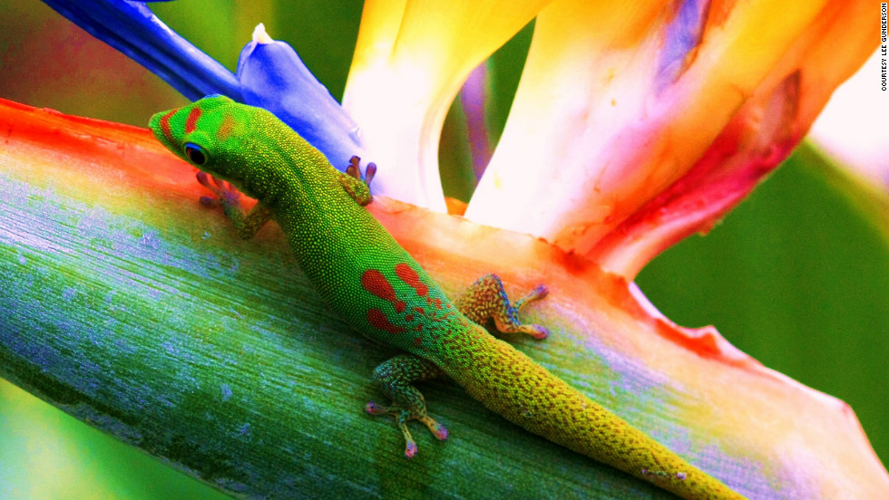 Colorful flora and fauna are part of the islands' tropical allure.