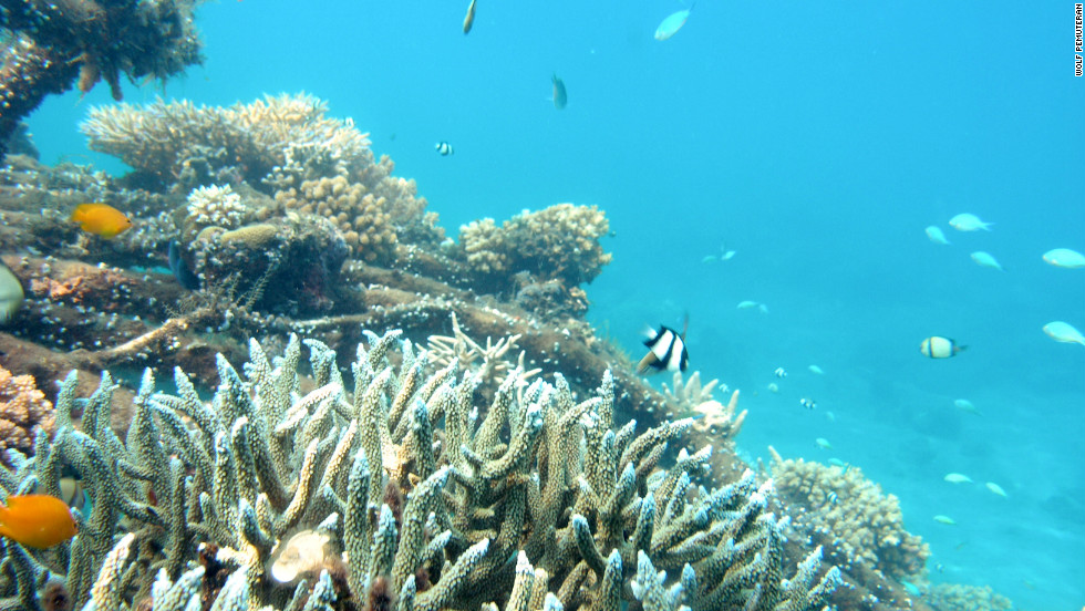 Electrically powered steel structures have helped re-grow the coral reefs of Permuteran Bay in Bali, Indonesia.