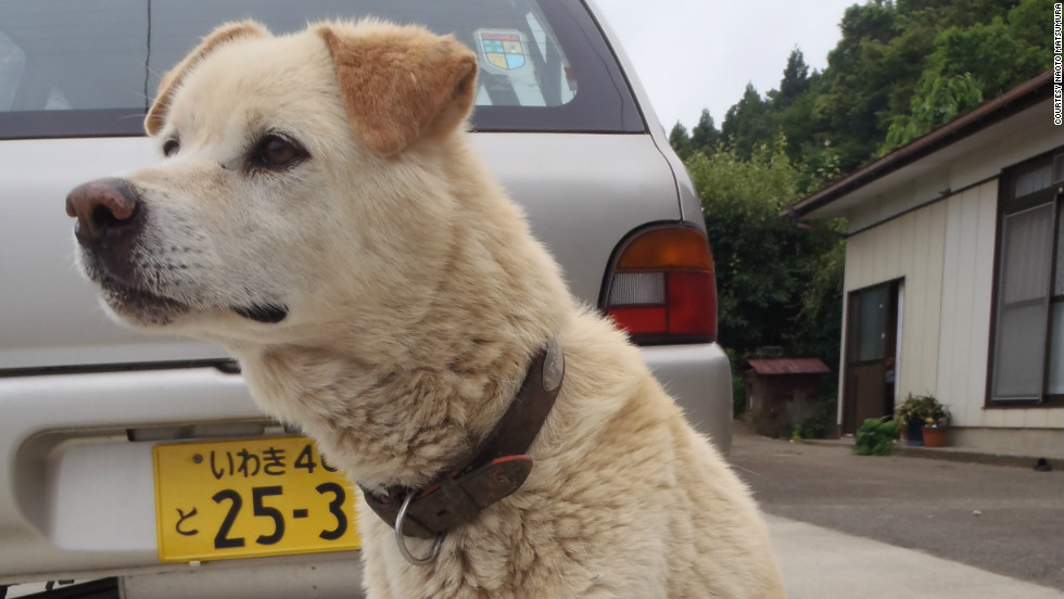This dog with a missing leg is being cared for by Naoto Matsumura, a resident living in the exclusion zone in defiance of a mandatory evacuation order.
