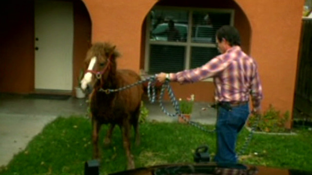 pkg ca pony roundup_00011104