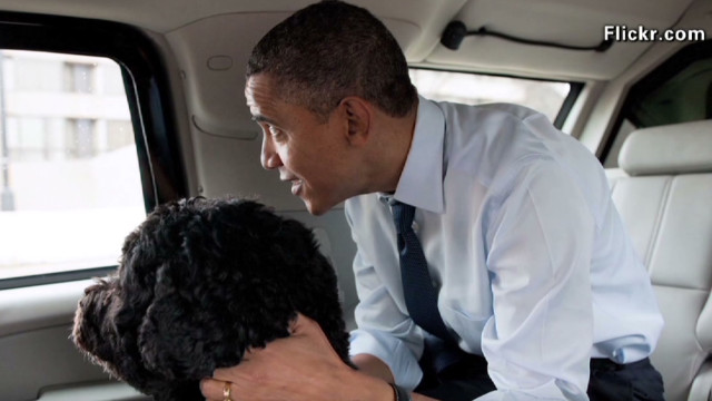 nr pet lovers for obama_00003829