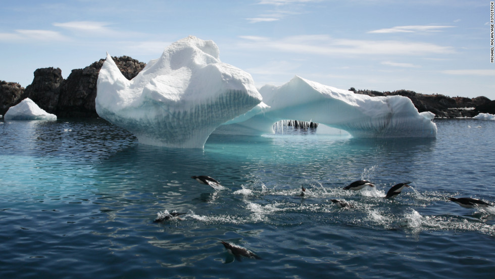 Adelie penguins are leaping in front of a beautiful iceberg at Heroina Island in the Weddell Sea, Antarctica.