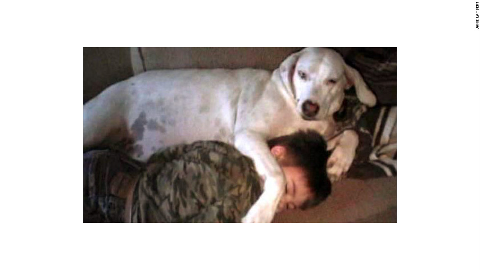 Janie Lambert says she wasn't able to give her foxhound, Jeni, the exercise the dog needed, and within a year of being adopted, Jeni had put on 60 pounds. Lambert's son and daughter-in-law worked with Jeni to get the weight down by cutting her food to 1¾ cup twice a day, a grain-free diet and several walks a day.