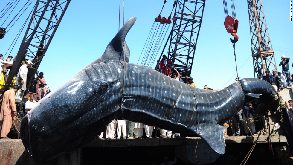 "Un grupo de pescadores capturó a este ""monstruo"" de las profundidades del Mar Arábigo en Pakistán."