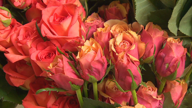 Valentine's boom for Indian roses