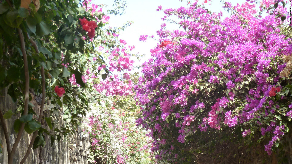 A beautiful flower-shaded walkway masks painful memories from centuries ago.