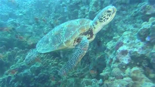 Great Barrier Reef goes virtual