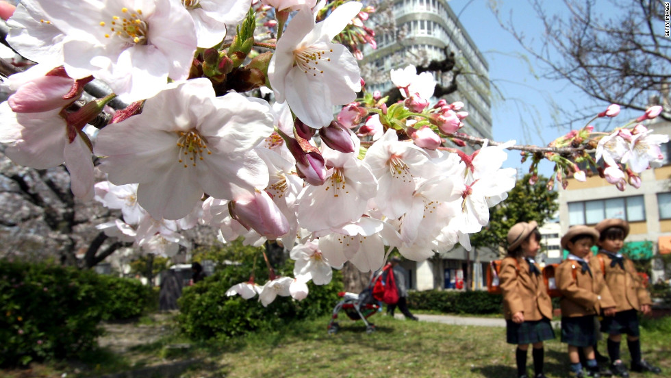 For true lovers of cherry blossoms, Fukuoka's Maizuru Park is the place to be come spring.