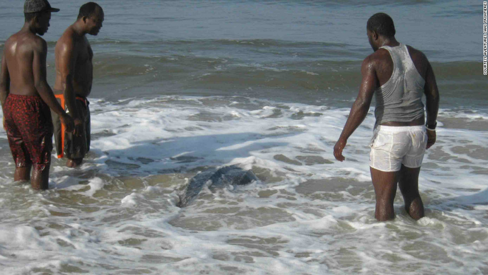 Returning a leatherback to the ocean.