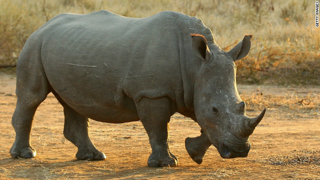 Fighting rhino poaching with spy gear