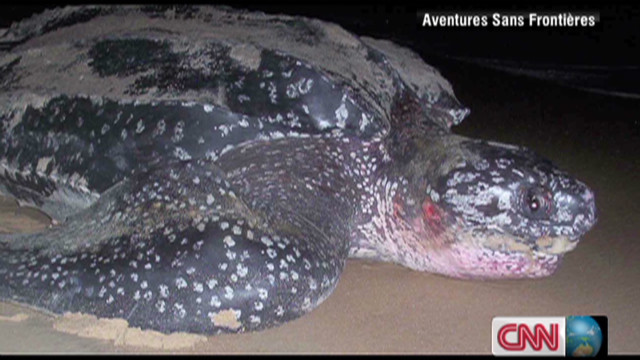 Gabon's Leatherback Turtles