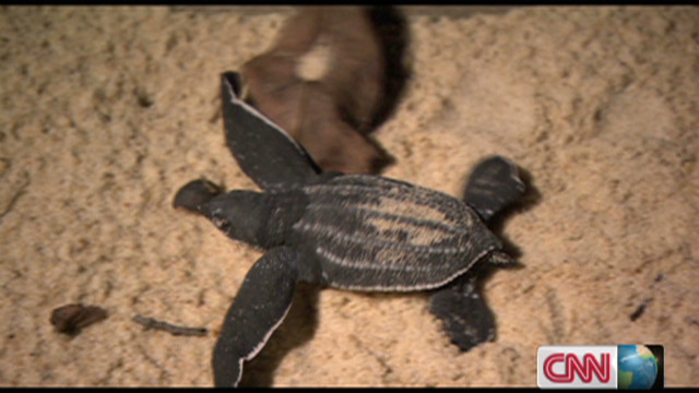 Identifying turtle activity