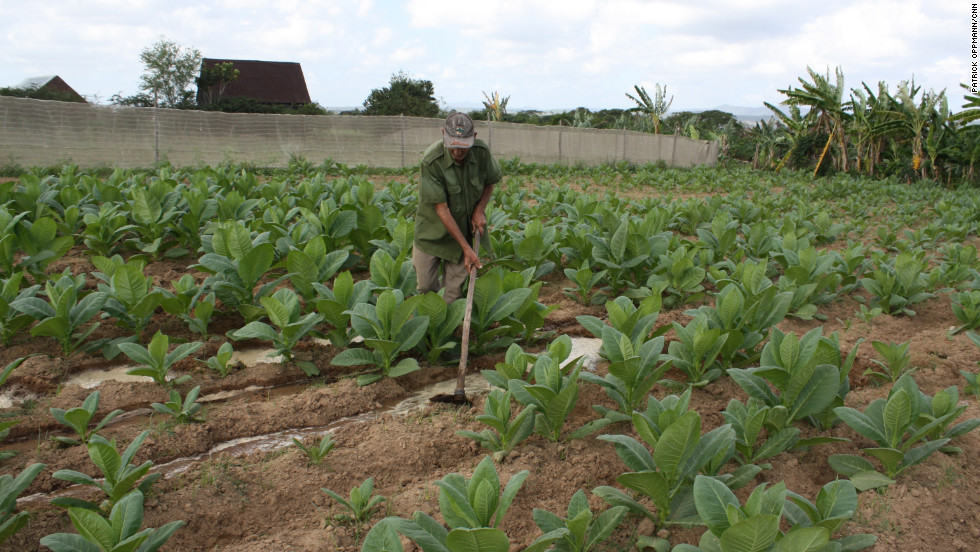 Lung cancer is prevalent in Cuba in large part thanks to one of the country's staples: tobacco.