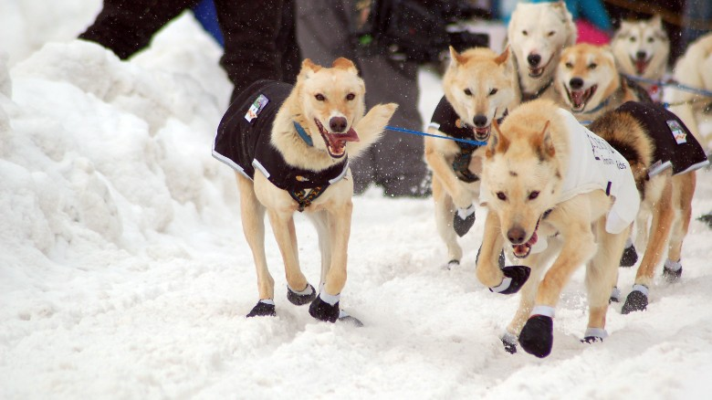 Iditarod dog dies after snow machine attack