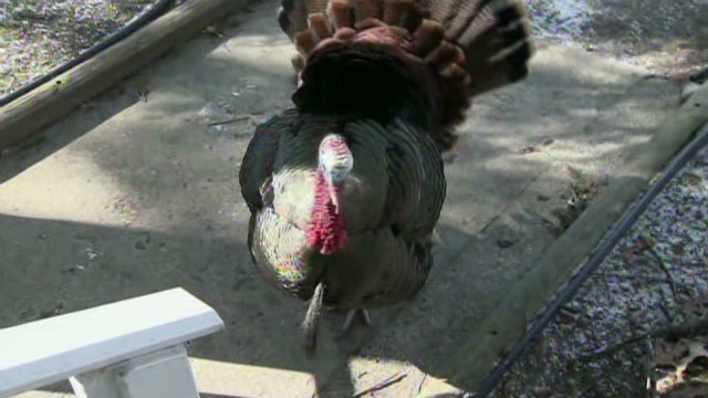 dnt turkey attacks woman_00001703