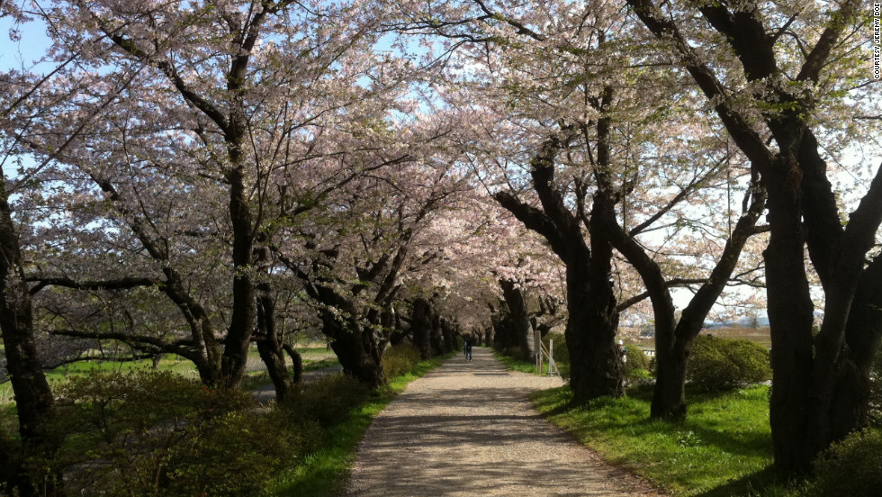 "Jeremy Doe, a high-school English teacher living in Kitakami City, took this photo of cherry blossoms to symbolize rebirth. ""One year later, we are still dealing with this ... but we are still living,"" he said."