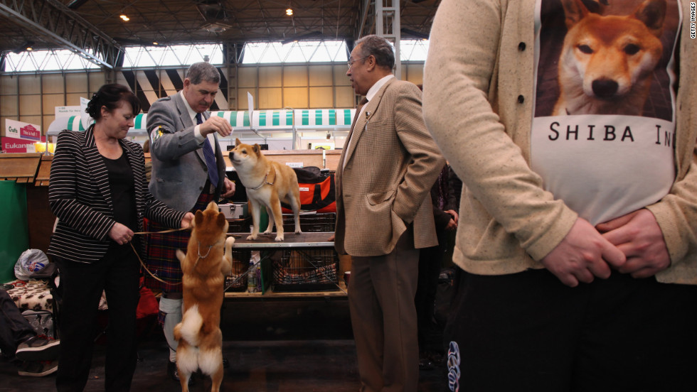 Shiba Inus and their owners are seen backstage on day one.