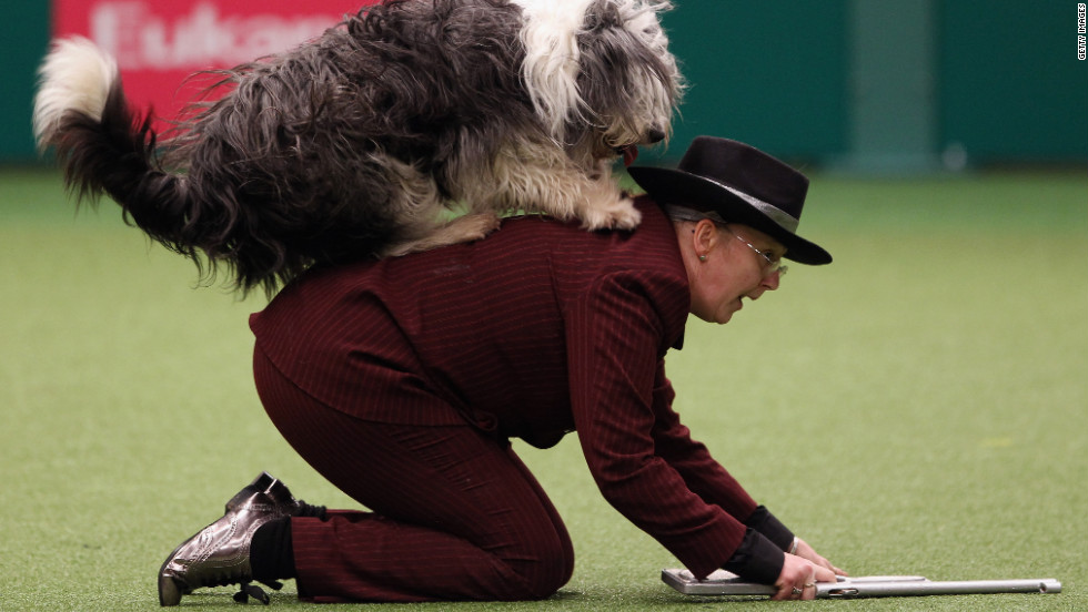 A dog and its owner perform a routine in the main arena on Saturday.