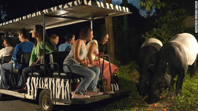 Singapore Zoo's Night Safari